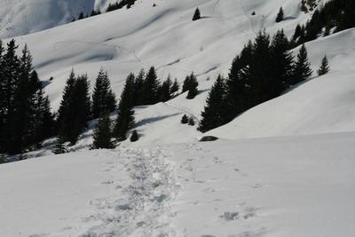 Snövandring iFiss
