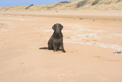 På stranden i Mellbystrand