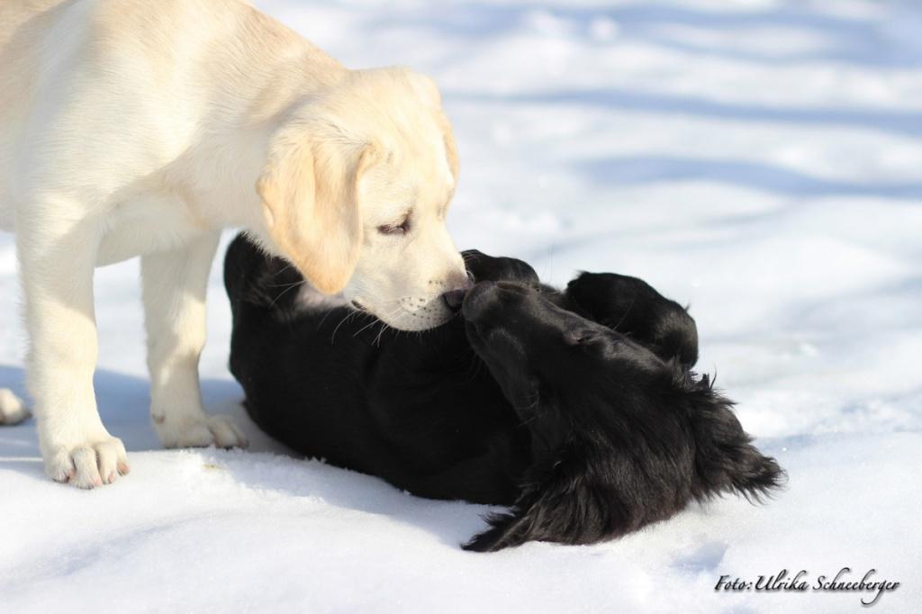 Hundskolanklein