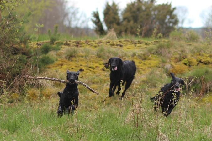 Loka, Peppar och Olaf
