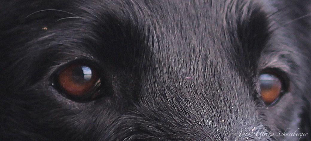 Augen Peppar